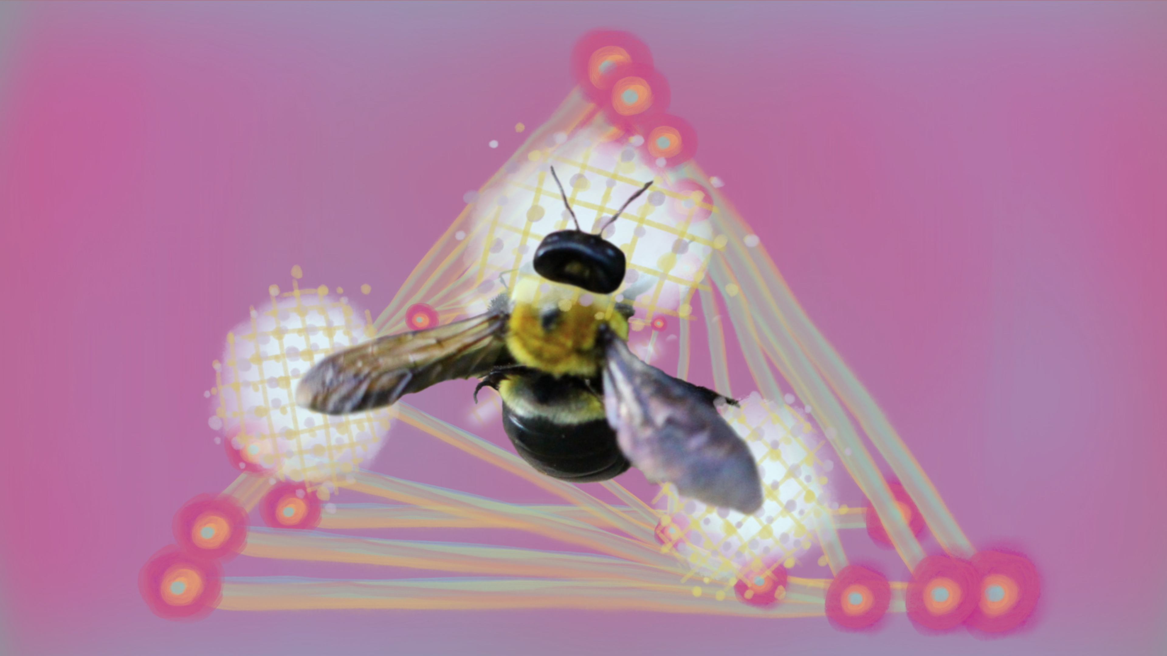 an image of a bee surrounded by surreal lights on a purple backgroiund